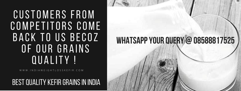 BUY KEFIR GRAINS ONLINE INDIA