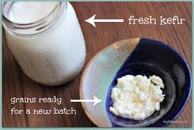 Buy Kefir Grains Online in Tripura